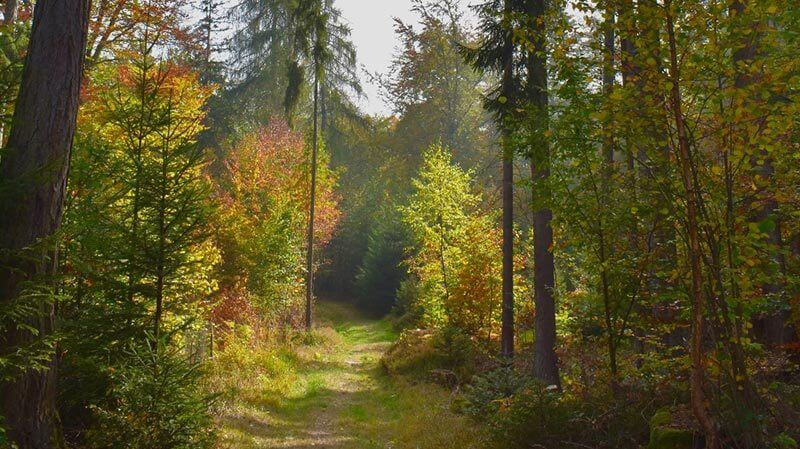 Forest trail in Annecy