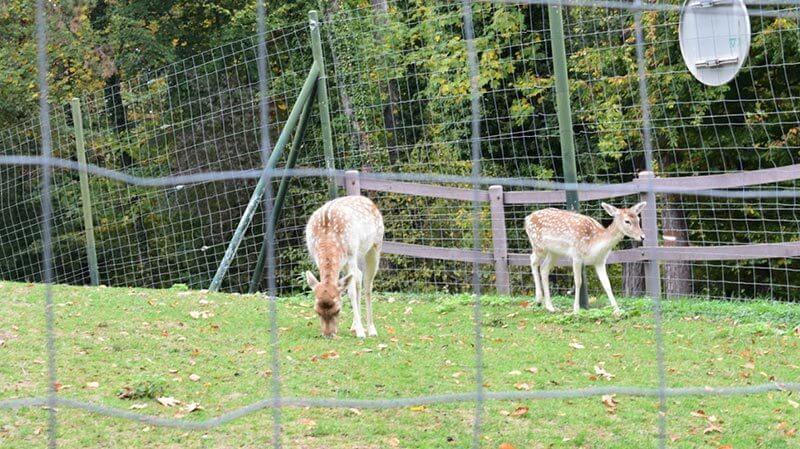 Cute deer in Annecy